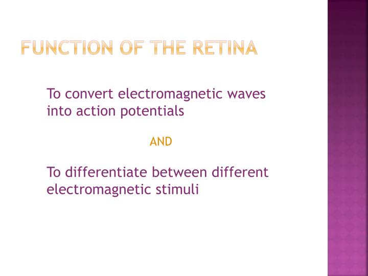 Function of the retina1