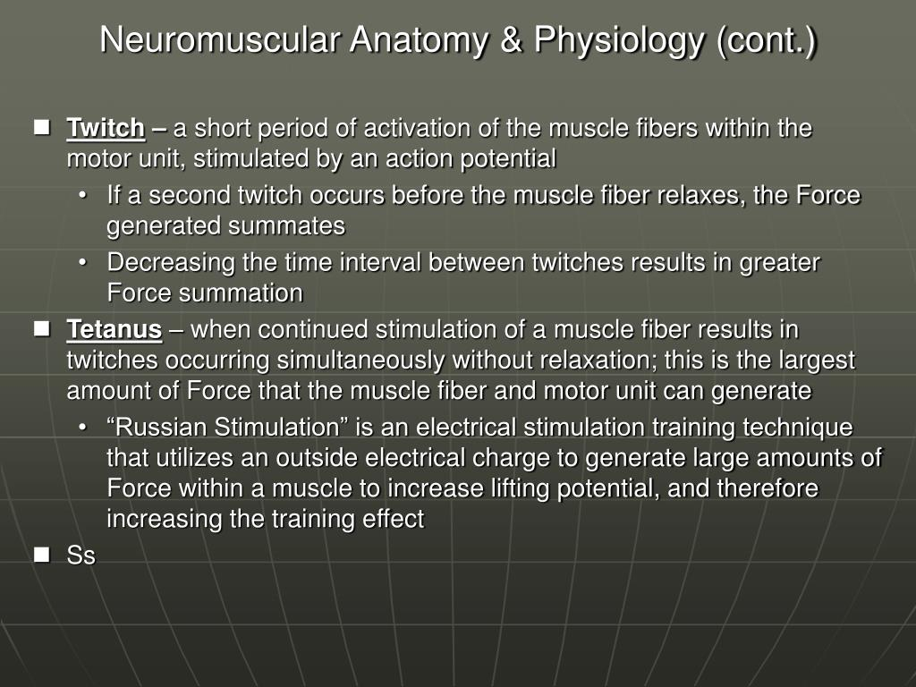 Neuromuscular Anatomy & Physiology (cont.)
