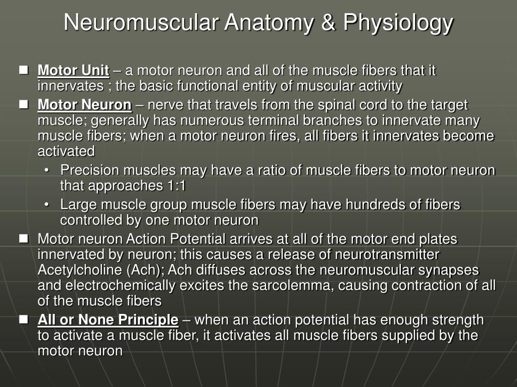 Neuromuscular Anatomy & Physiology