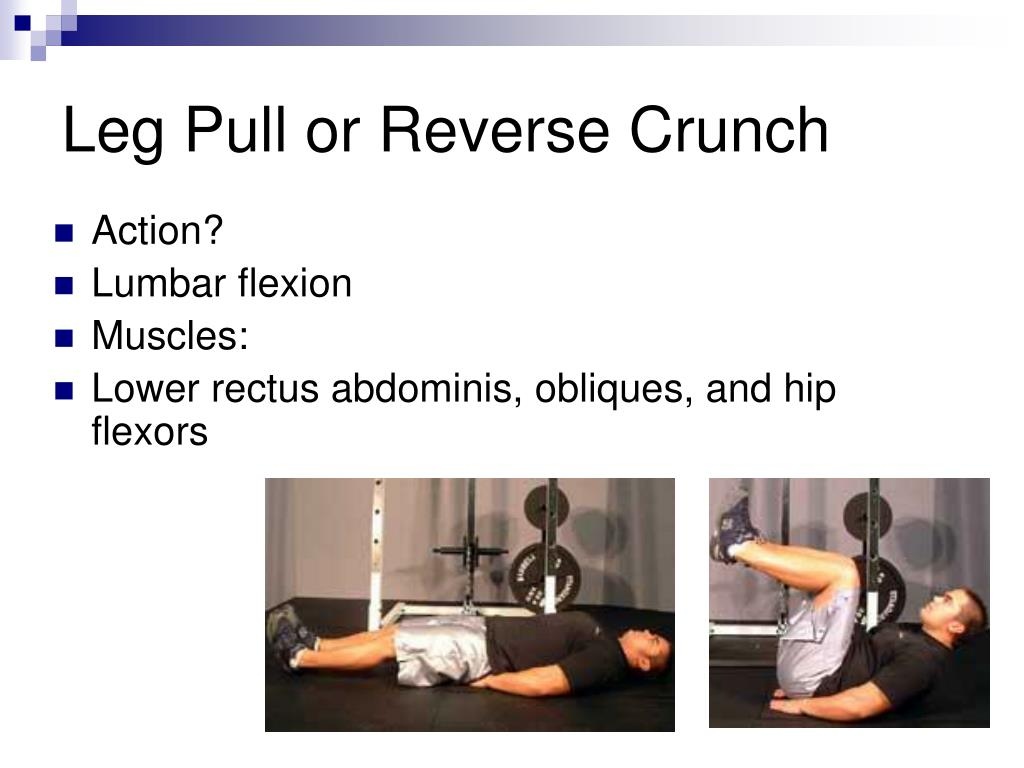 Leg Pull or Reverse Crunch