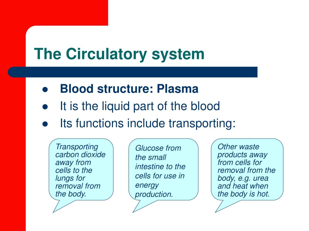 Blood structure: Plasma