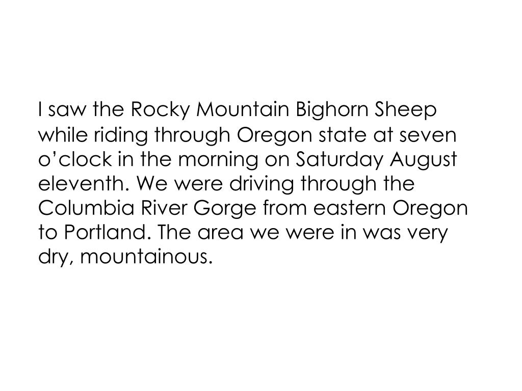 I saw the Rocky Mountain Bighorn Sheep while riding through Oregon state at seven o'clock in the morning on Saturday August eleventh. We were driving through the Columbia River Gorge from eastern Oregon to Portland. The area we were in was very dry, mountainous.