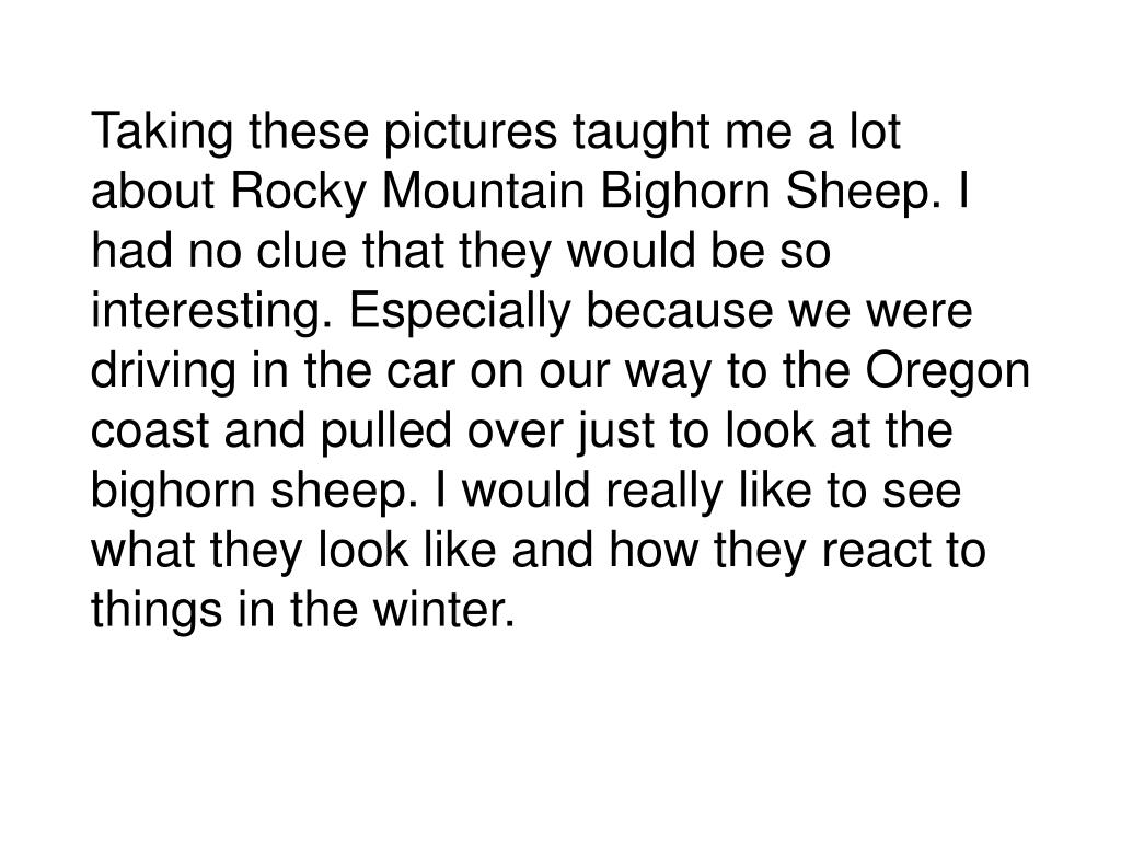 Taking these pictures taught me a lot about Rocky Mountain Bighorn Sheep. I had no clue that they would be so interesting. Especially because we were driving in the car on our way to the Oregon coast and pulled over just to look at the bighorn sheep. I would really like to see what they look like and how they react to things in the winter.