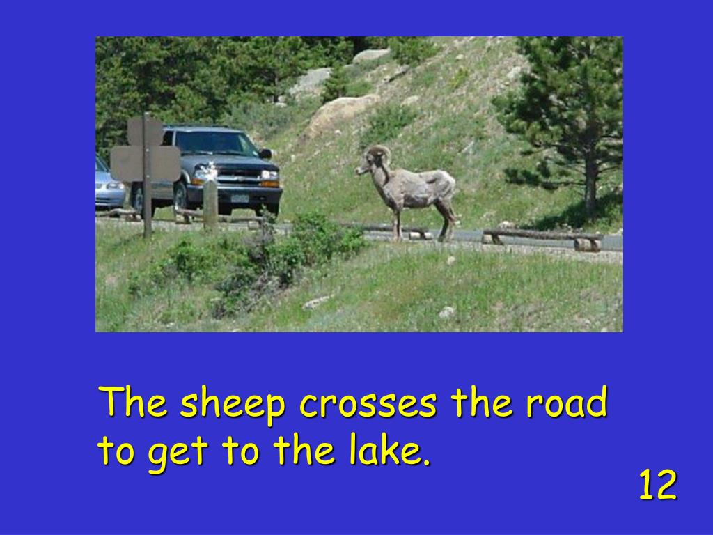 The sheep crosses the road to get to the lake.