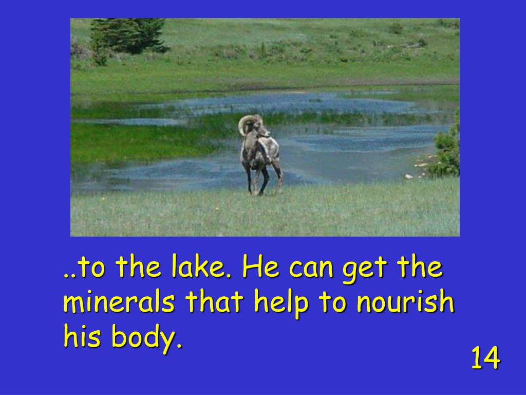 ..to the lake. He can get the minerals that help to nourish his body.