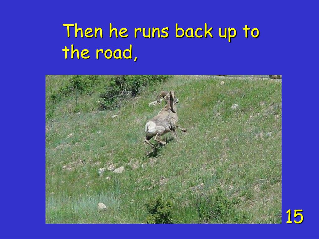 Then he runs back up to the road,