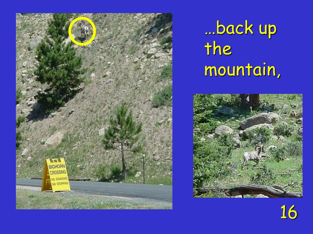 …back up the mountain,