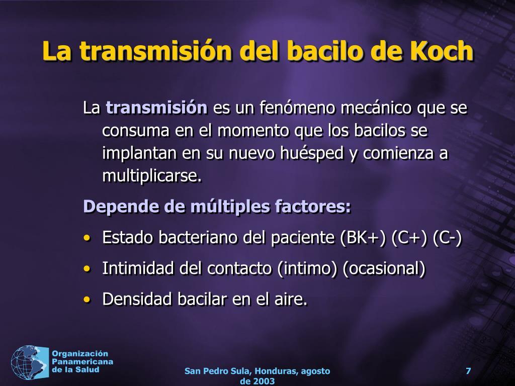 La transmisión del bacilo de Koch