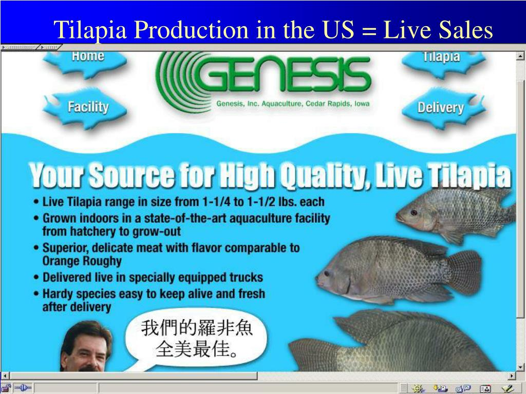 Tilapia Production in the US = Live Sales