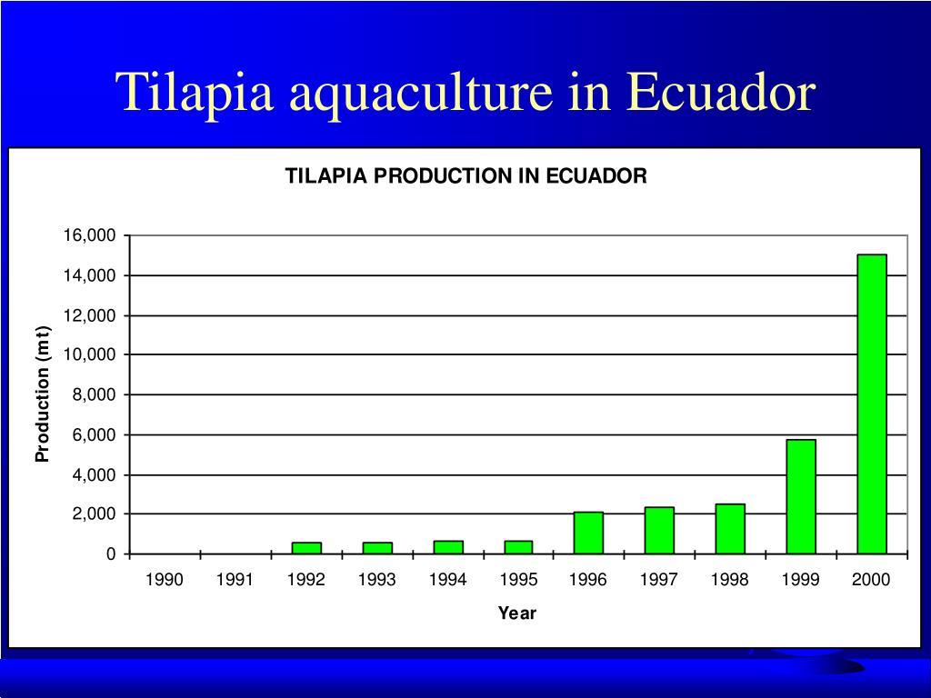 Tilapia aquaculture in Ecuador