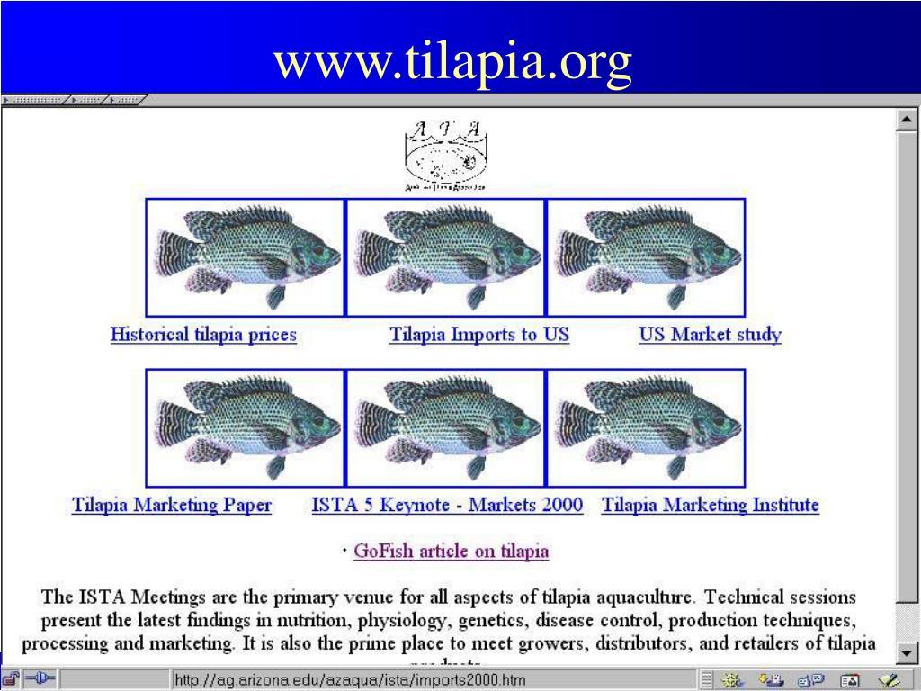 www.tilapia.org