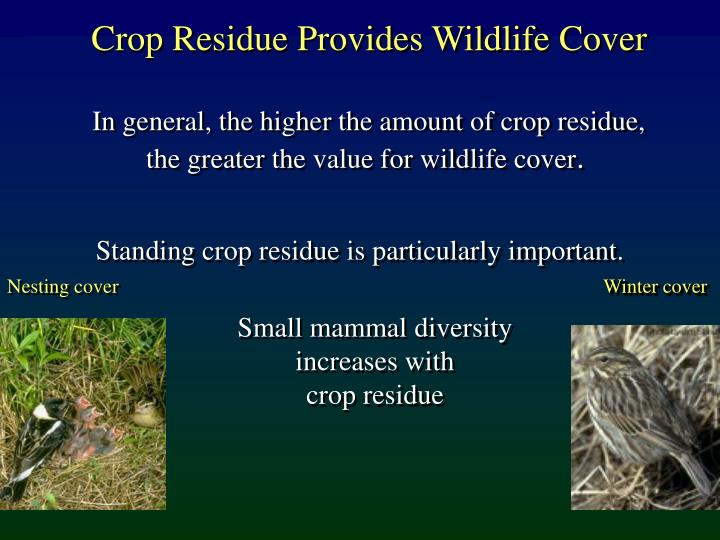 Crop Residue Provides Wildlife Cover