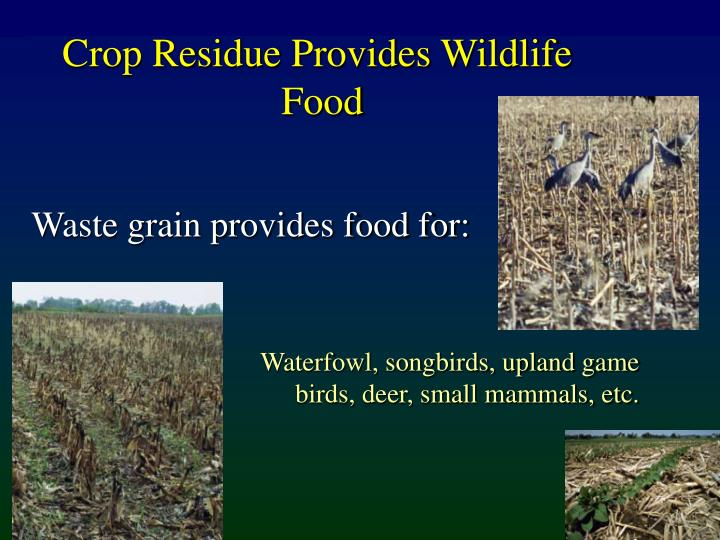 Crop Residue Provides Wildlife