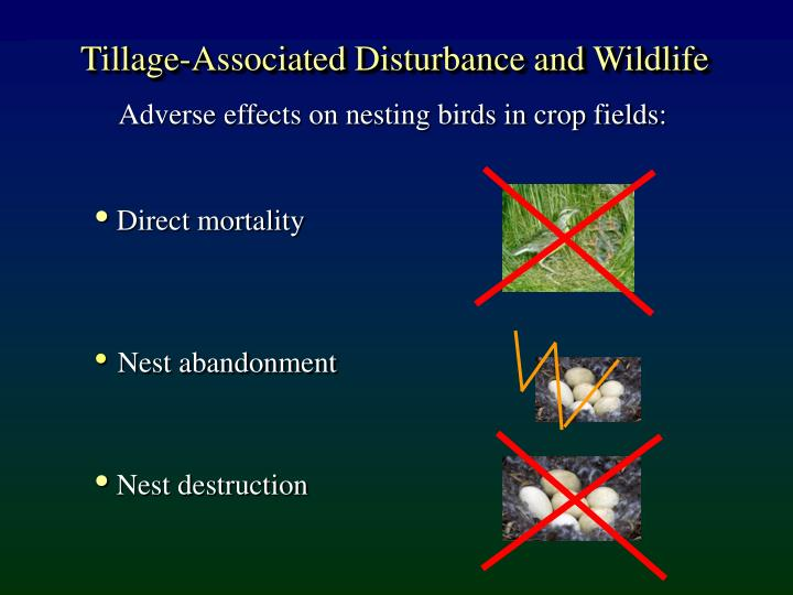Tillage-Associated Disturbance and Wildlife