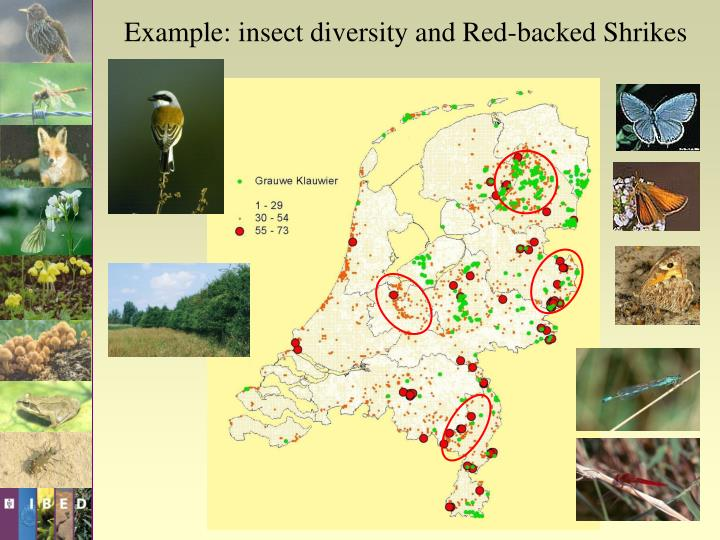 Example: insect diversity and Red-backed Shrikes