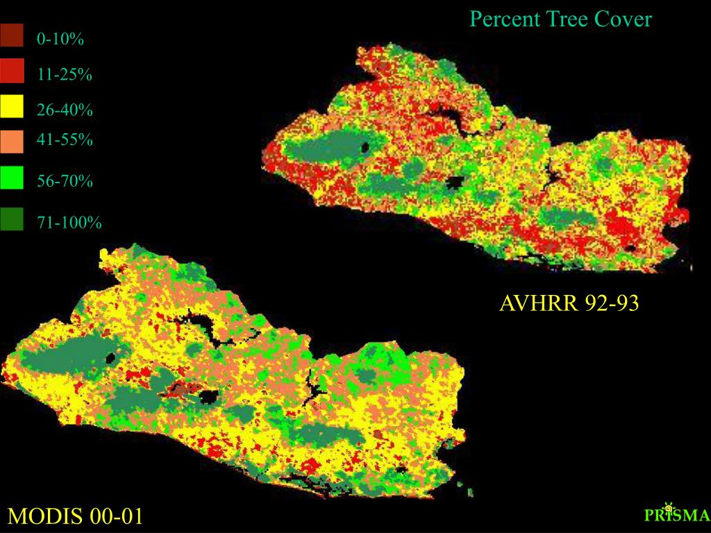 Percent Tree Cover