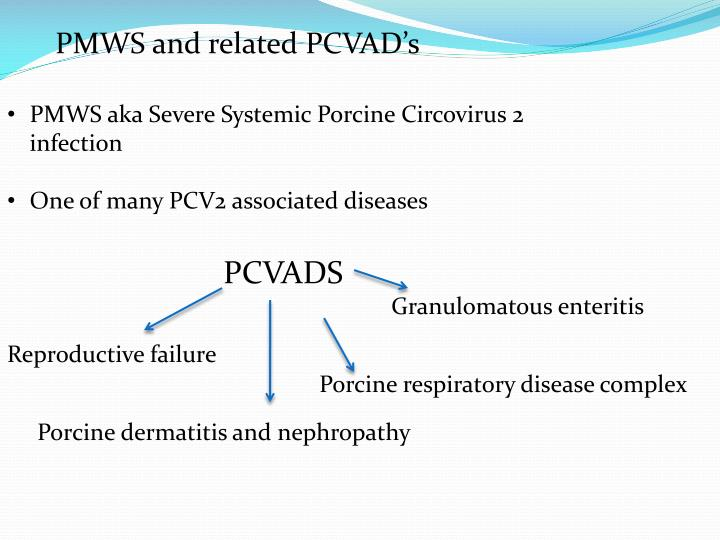 PMWS and related PCVAD's