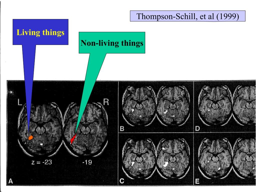 Thompson-Schill, et al (1999)