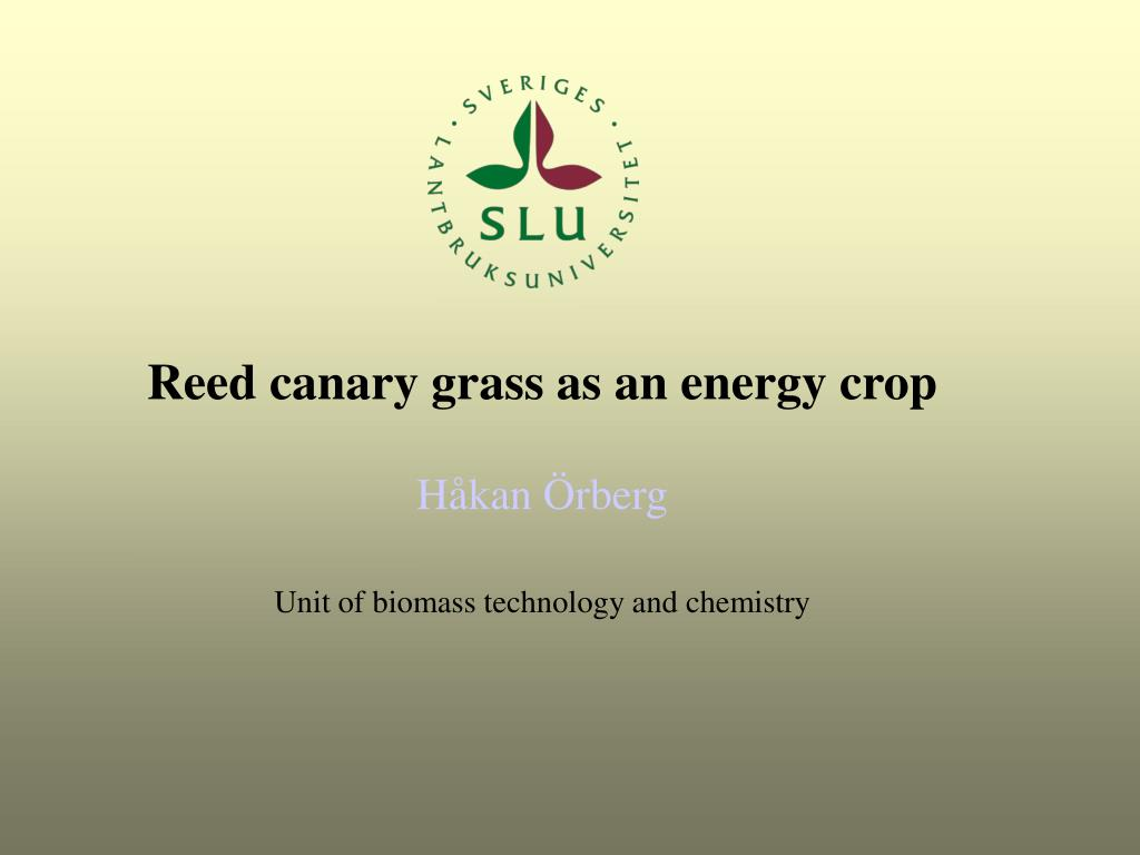 Reed canary grass as an energy crop