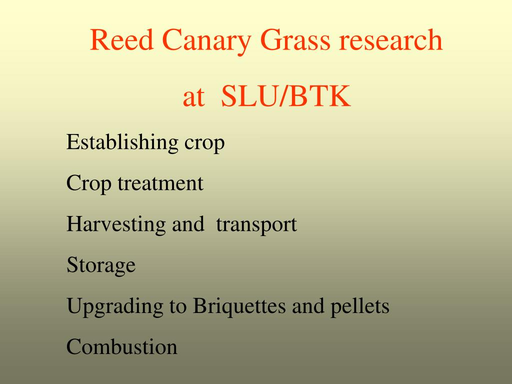 Reed Canary Grass research