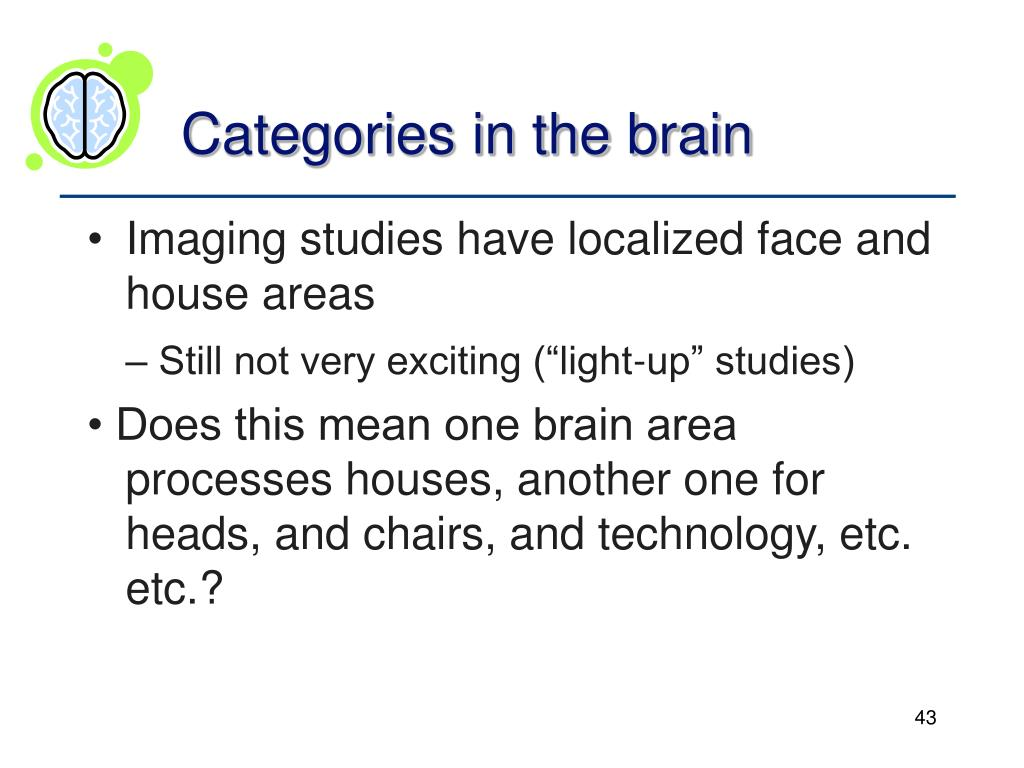 Categories in the brain