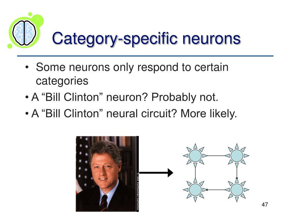 Category-specific neurons