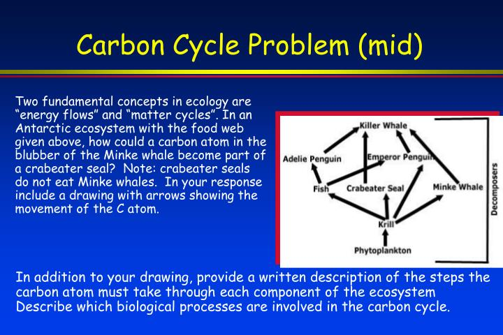 Carbon Cycle Problem (mid)