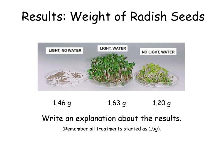 Results: Weight of Radish Seeds
