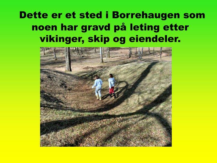 Dette er et sted i Borrehaugen som noen har gravd på leting etter vikinger, skip og eiendeler.