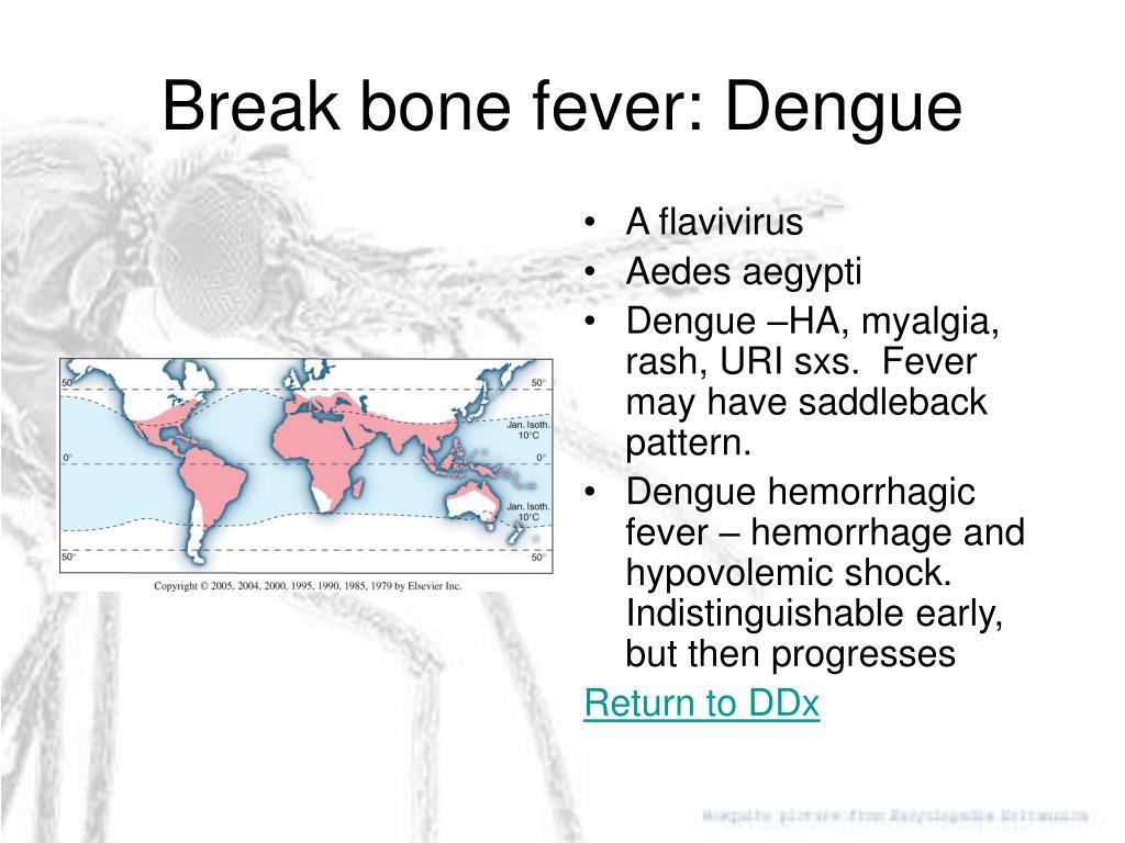 A flavivirus