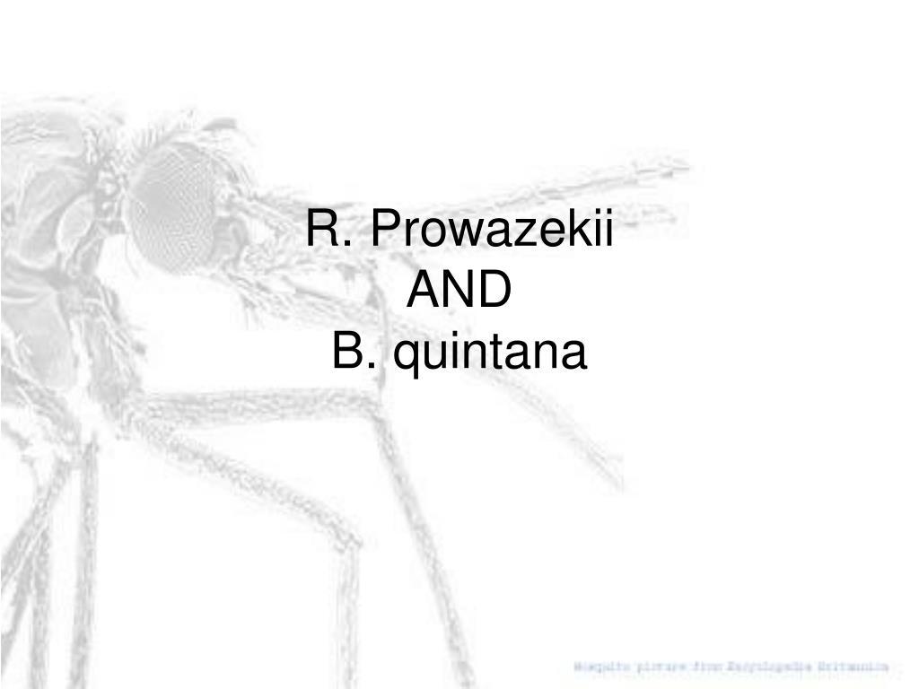 R. Prowazekii