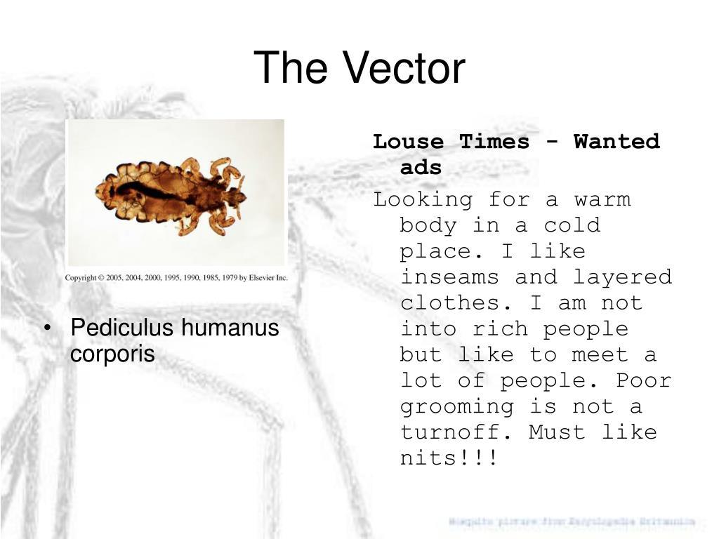 Pediculus humanus corporis