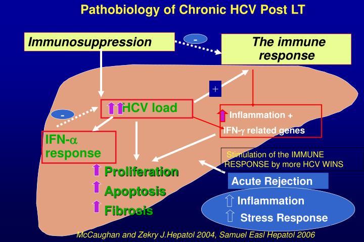 Pathobiology of Chronic HCV Post LT