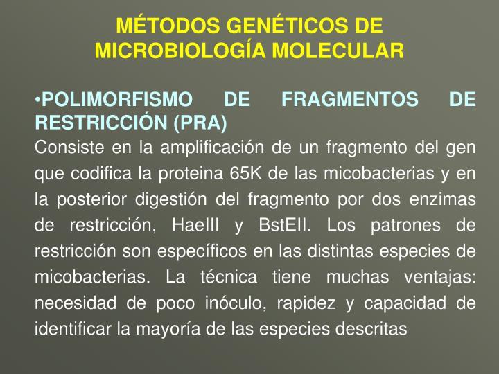 MÉTODOS GENÉTICOS DE MICROBIOLOGÍA MOLECULAR