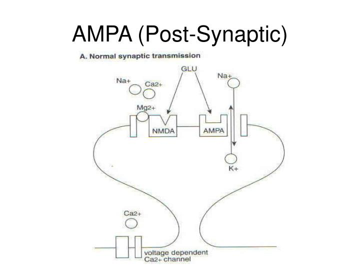 AMPA (Post-Synaptic)