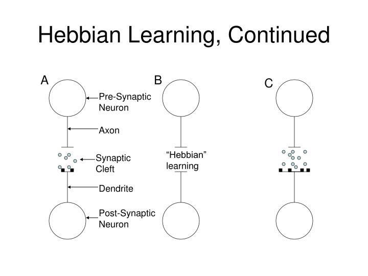 Hebbian Learning, Continued