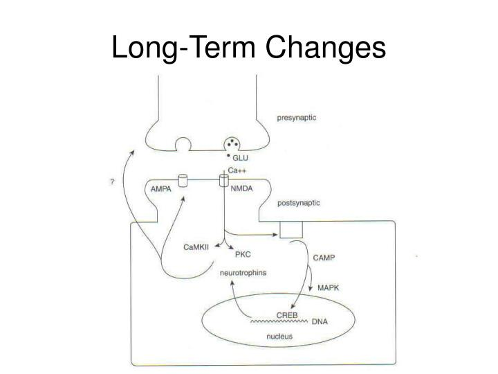 Long-Term Changes