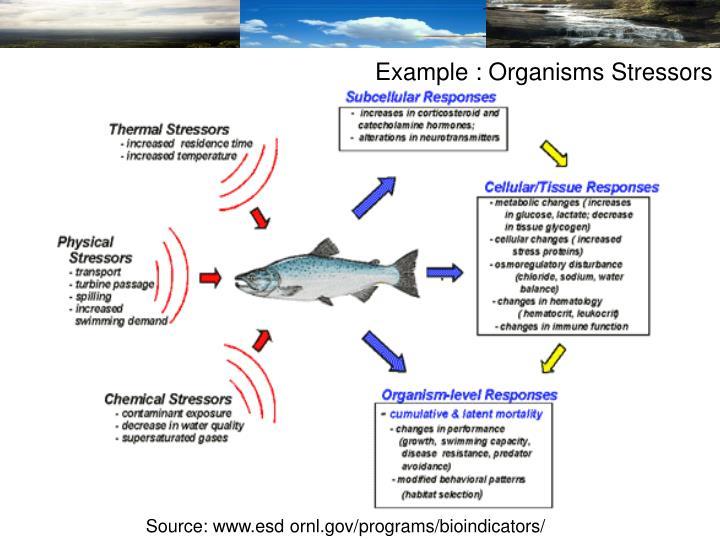 Example : Organisms Stressors