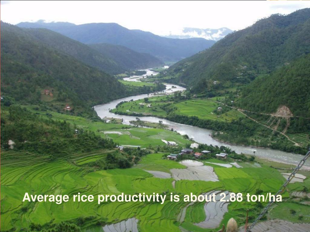 Average rice productivity is about 2.88 ton/ha