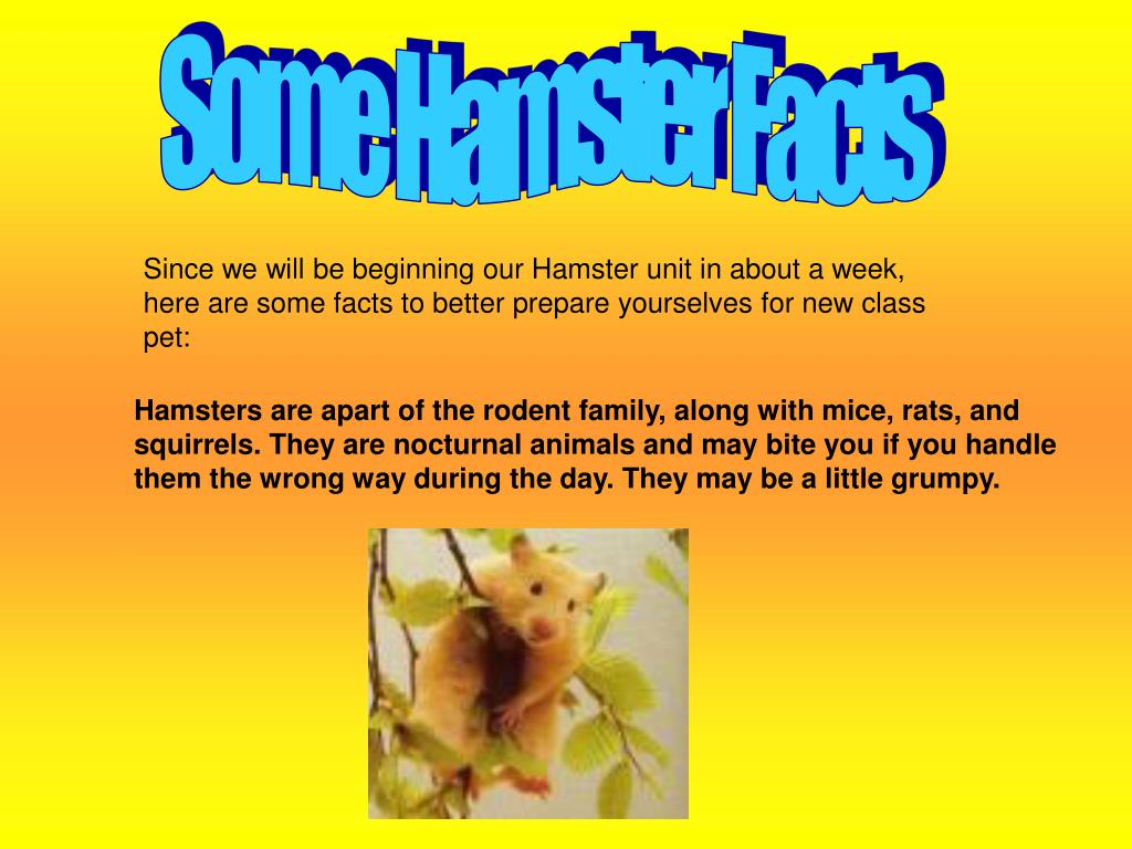 Some Hamster Facts