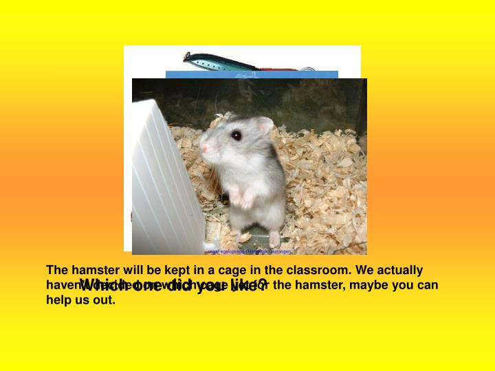 The hamster will be kept in a cage in the classroom. We actually haven't decided on which cage yet...