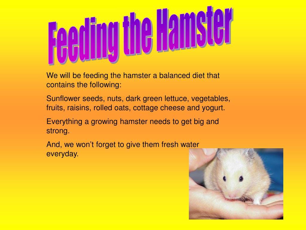 Feeding the Hamster