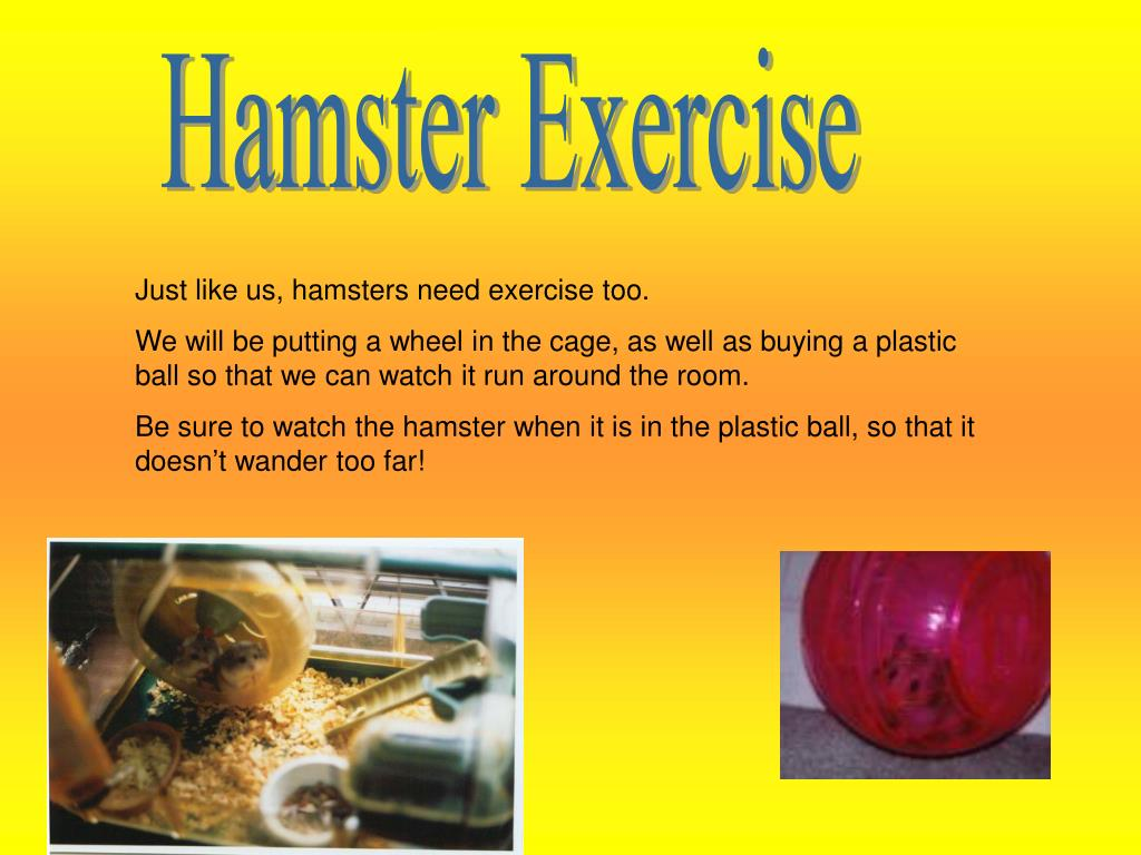 Hamster Exercise