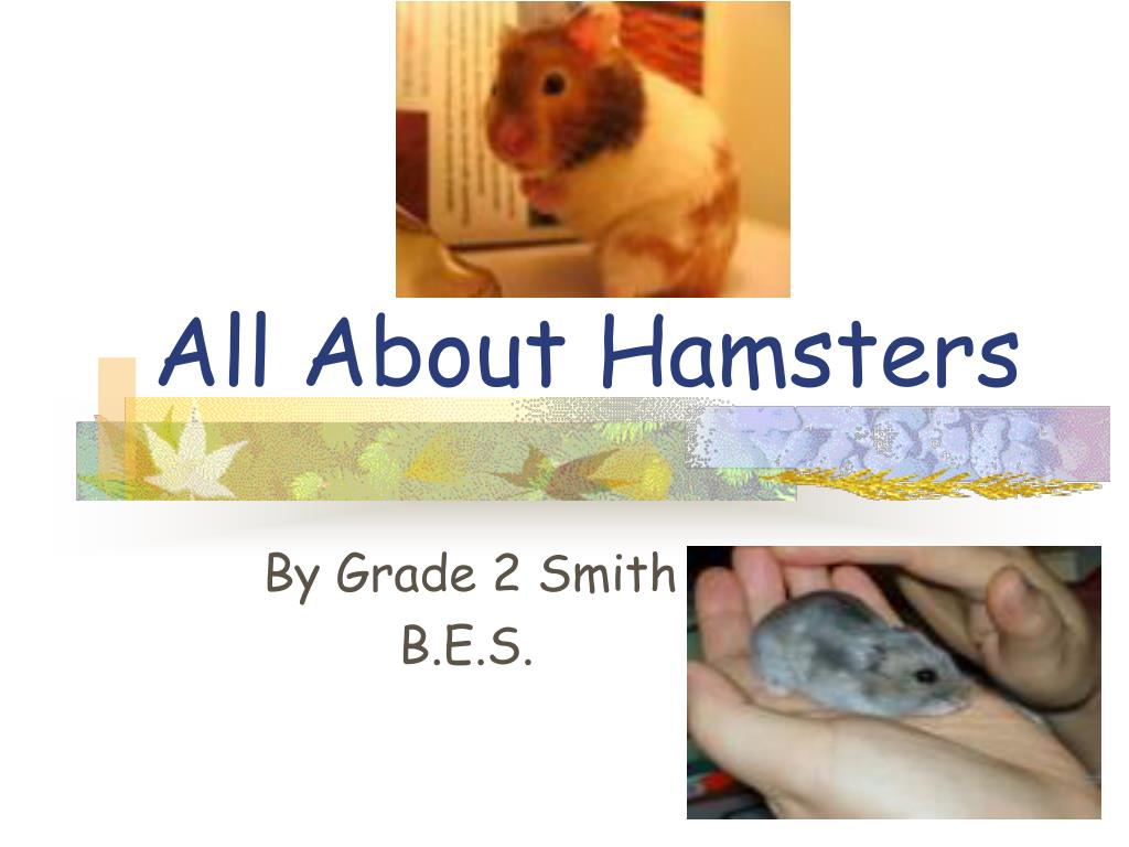 All About Hamsters