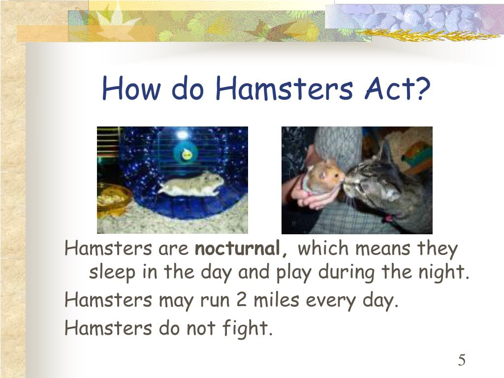 How do Hamsters Act?