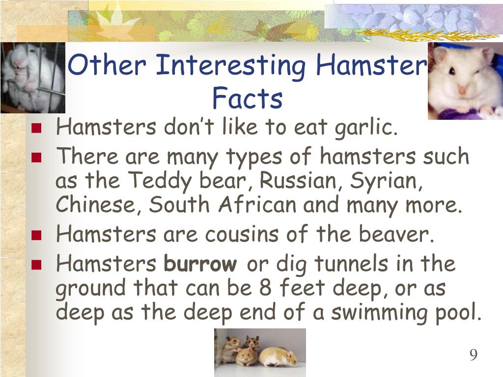 Other Interesting Hamster Facts
