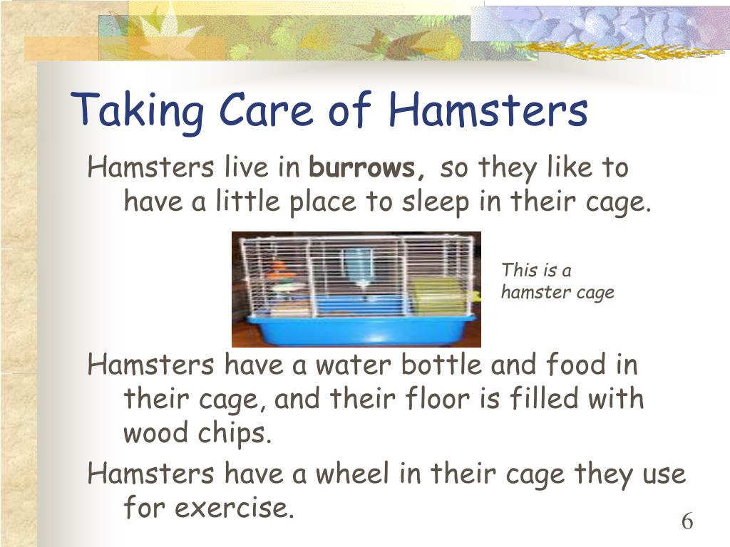 Taking Care of Hamsters