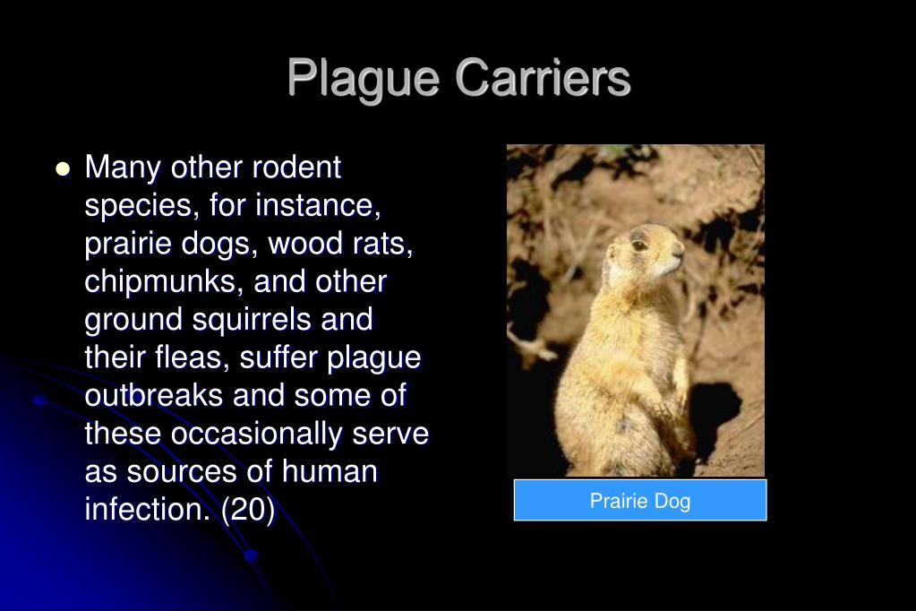 Plague Carriers