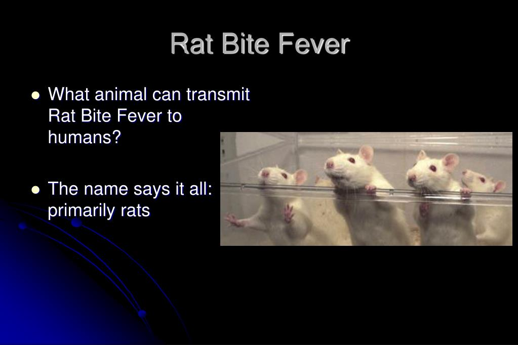 Rat Bite Fever
