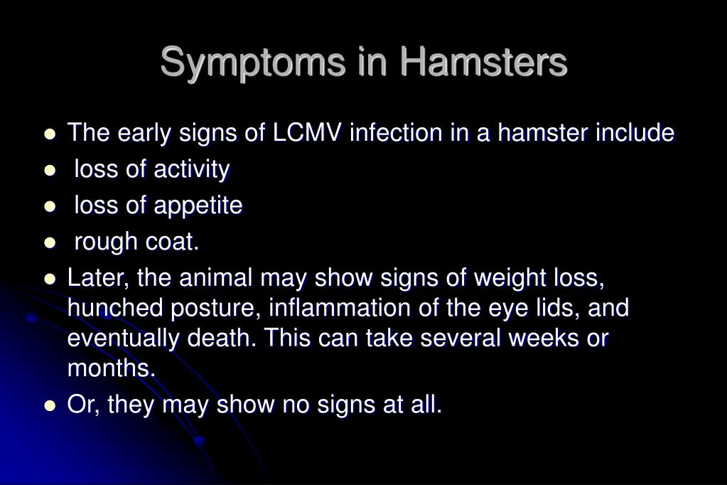 Symptoms in Hamsters